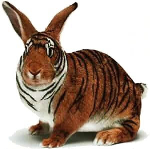 Tiger Rabbit Mutation - Viral Marketing