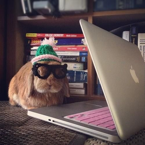 Hipster Rabbit at Computer