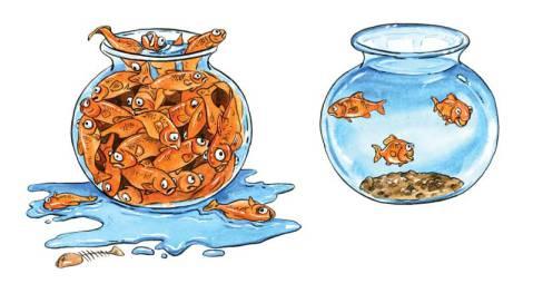 Carrying Capacity Fish Bowls - Viral Marketing Growth
